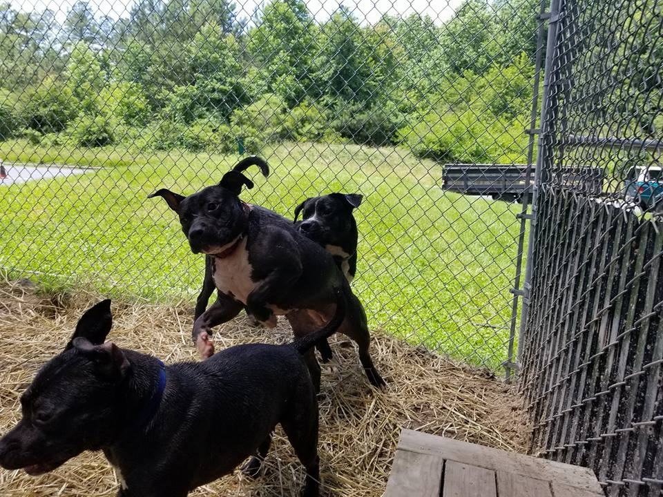 Dogs Playing For Life | Humane Society of Wicomico County