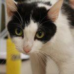 Moo Moo Kitty-42586