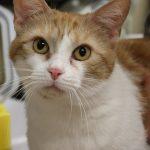 Miss Kitty-42278