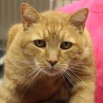 Garfield-46058