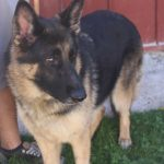 Zoey-46108