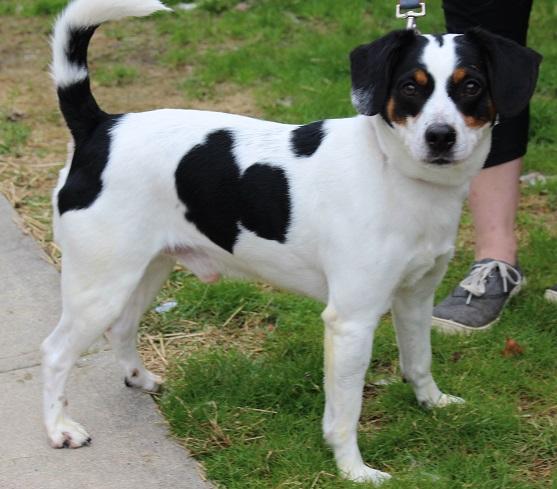 Lucky Pup-47233