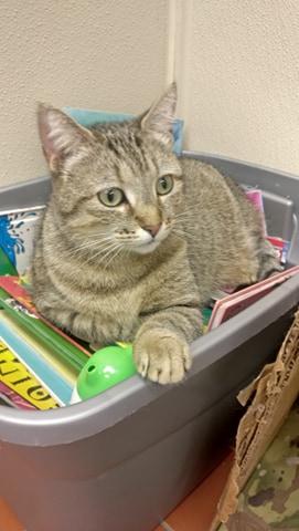 Miss Kitty Cat -47870